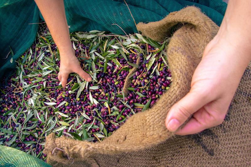 Tuempleo-el-sector-agroalimentario-necesita-trabajadores